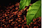 Масляный экстракт черного кофе