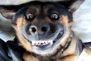 Курс Послух собак